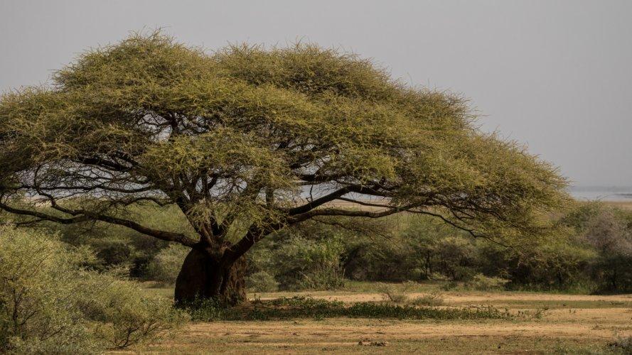 Tom Scherlis Tanzania-0504