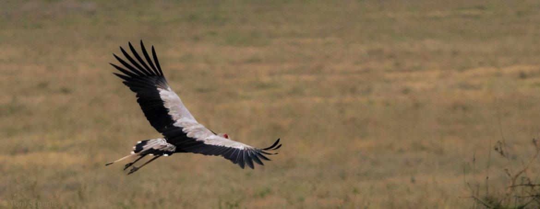 Tom Scherlis Tanzania-3780