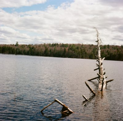 dead-tree-in-the-lake