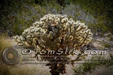 Joshua Tree Astro-Photograpy 11-2-2013 0493