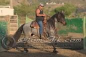 Lynn & Sam Team Cow Sorting 5-18-2016 0082