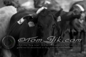 Lynn & Sam Team Cow Sorting 5-18-2016 0085
