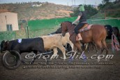 Lynn & Sam Team Cow Sorting 5-18-2016 0190