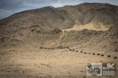 King of the Hammers 2017 1541