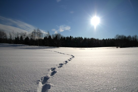 A common view in winterly Norway