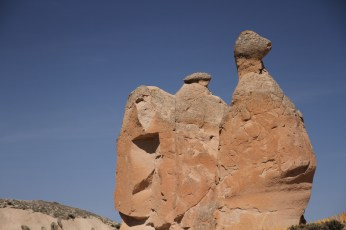 Cappadocia - Camel