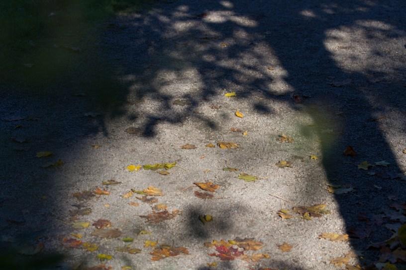 Shadows of fall