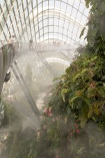 The Cloud Forest being misted