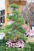 Just a pretty tree
