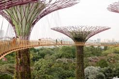 Singapore_GardensBay_0830