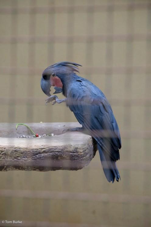 Birds_1389
