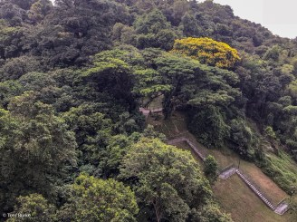 Forest and access path
