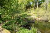 The beginning of the woodland walk
