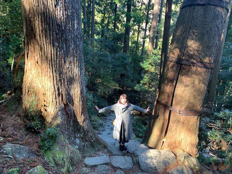 那智の滝の森