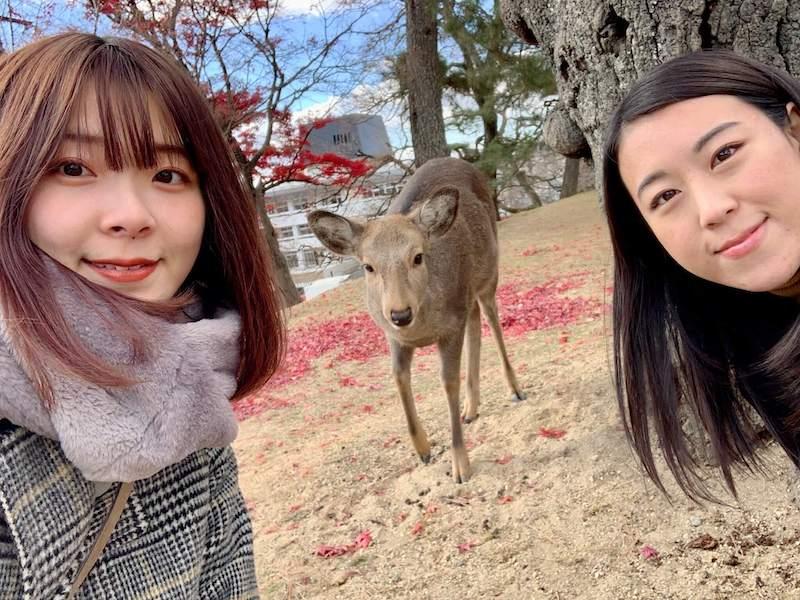奈良公園の鹿との写真