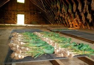 garlicbarn