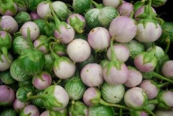 ThaiEggplant