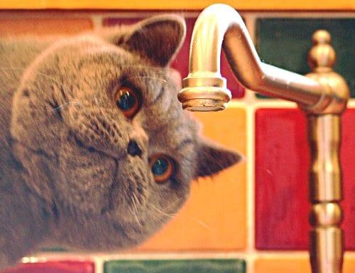 猫 雑貨 輸入