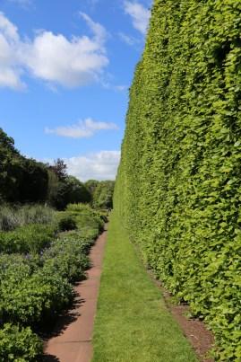 What a HEDGE! Royal Botanic Gardens, Edinburgh.