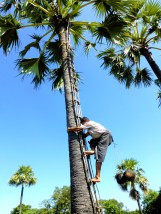 Een palmboom beklim je met? Een ladder...
