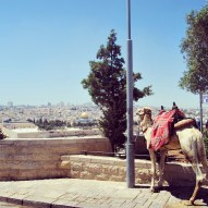A Look Over the Old City from Mount of Olives