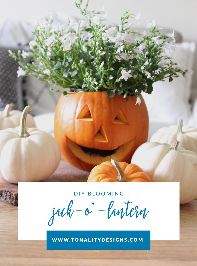 DIY Blooming Jack-O'-Lantern