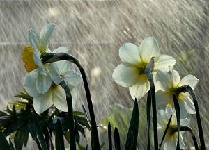 pavasario lietus