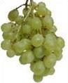 vynuogė