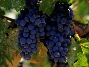 california-napa-valley-wineries