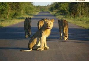 liūtės_šalin_stresą