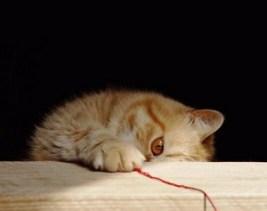 lygtys_katinas