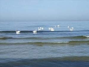 mažytė jūra