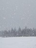 sniegas_Agnusyte2011Foto