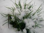 sniego_ežiukas_Agnusyte_foto