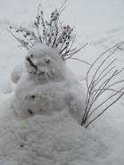 sniego_senis_Agnusyte2009foto