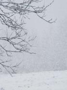 sninga_Agnusyte2009