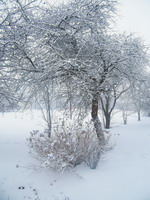 sodas_žiemą_Agnusyte_foto
