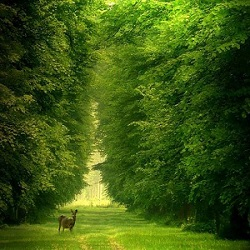 žalia simfonija