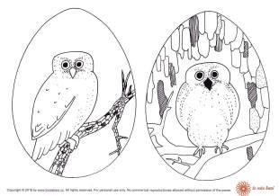 Easter Pigmy owl in Egg