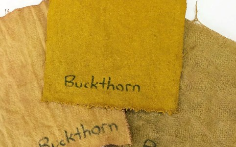 Buckthorn Bark natural dye