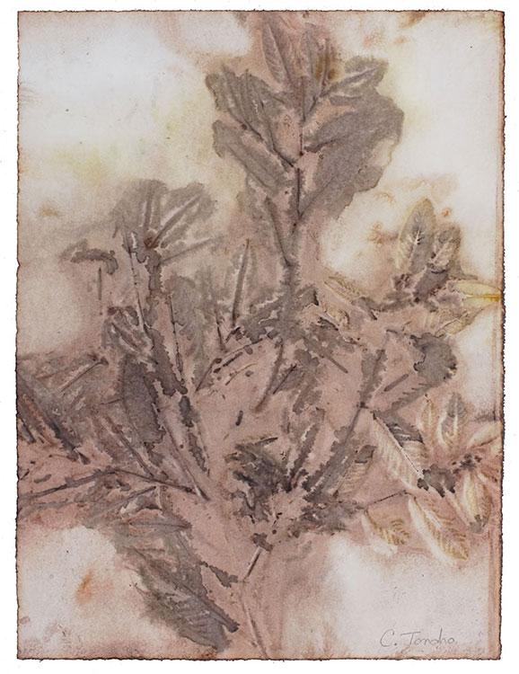 Cassandra Tondro, coffeeberry leaf print
