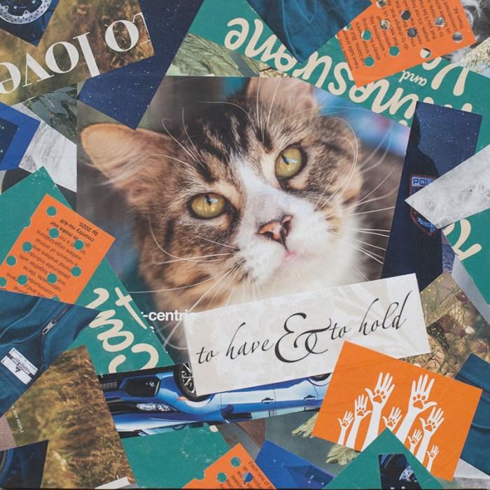 Cassandra Tondro cat collage