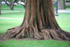 大木の根本