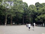 """""""都会の森""""明治神宮にノコギリクワガタの生息を確認"""