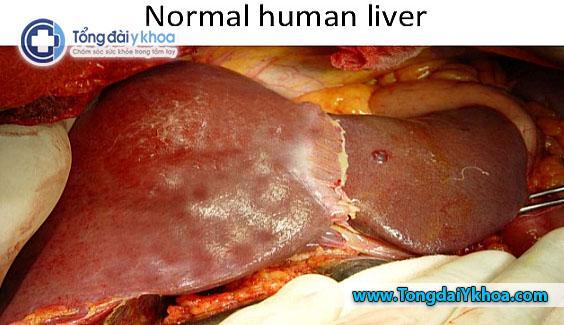 human liver hinh anh gan nguoi