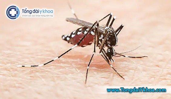 muỗi vằn Aedes gây bệnh sốt xuất huyết