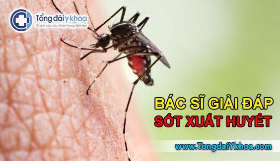 sốt xuất huyết dengue bệnh sốt xuất huyết
