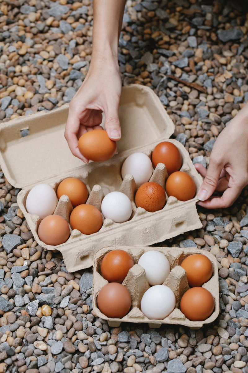 woman putting chicken eggs in carton containers