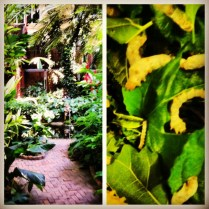 Jim Thompsons House and silk worms!