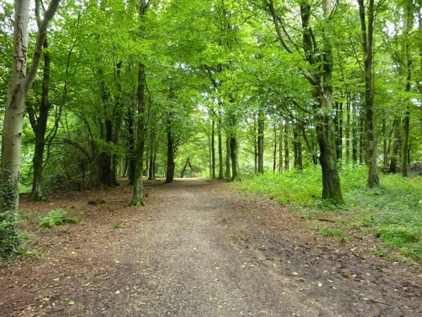 Fforest Fawr path